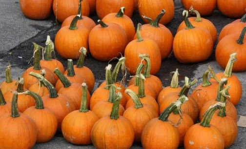 Pumpkins - waiting to be painted!